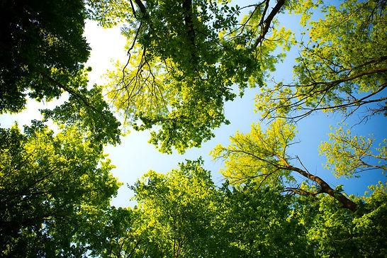 daylight-forest-hd-wallpaper-589802.jpg