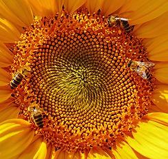 bees-bloom-blossom-158154.jpg