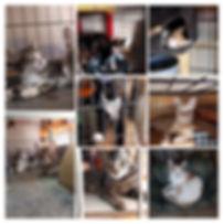 1 Katzentransport 20181106_201332-COLLAG