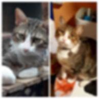 4 Chappi  20181106_204221-COLLAGE.jpg