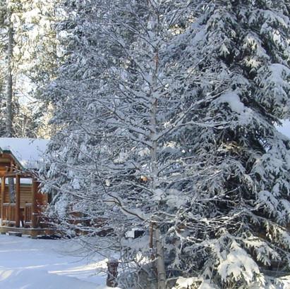 winter cabins.jpg