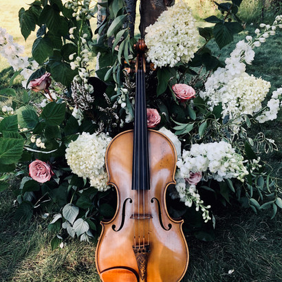 viola in flowers.jpeg