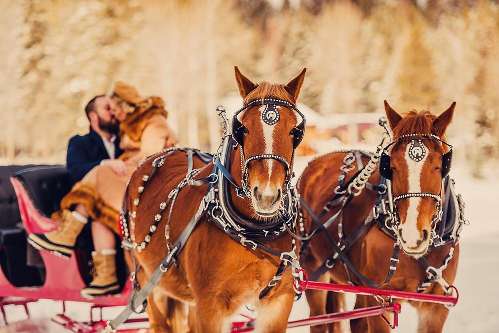 Marianne Wiest Photography; Cripple Creek Horse Ranch