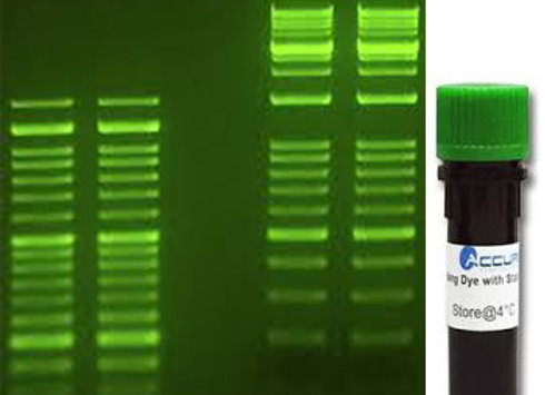 SmartGlow DNA Stains
