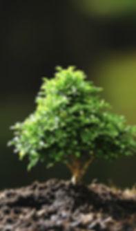 arboles-para-jardines-pequenos.jpg
