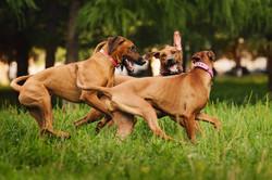 Wye-River-Kennel-Dog-3play