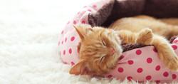 Wye-River-Kennel-KittenSleeping