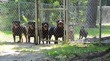 Wye river kennel secure outdoor play pens