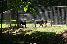 Wye river kennel outdoor exercise pens