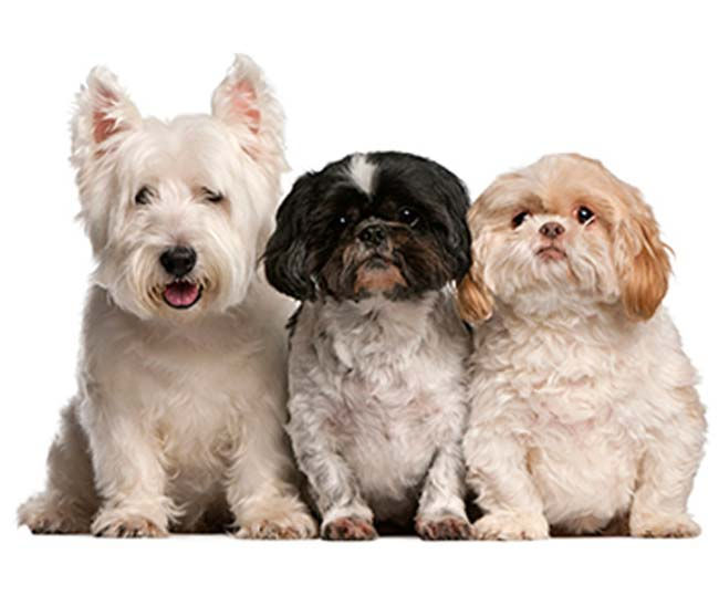 (3+) Dogs - Reservation
