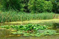 Wye-River-Kennel-Pond-5