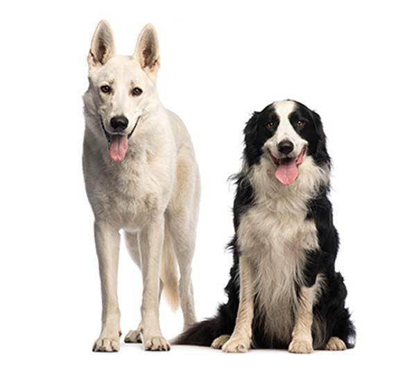 (2) Dog - Reservation