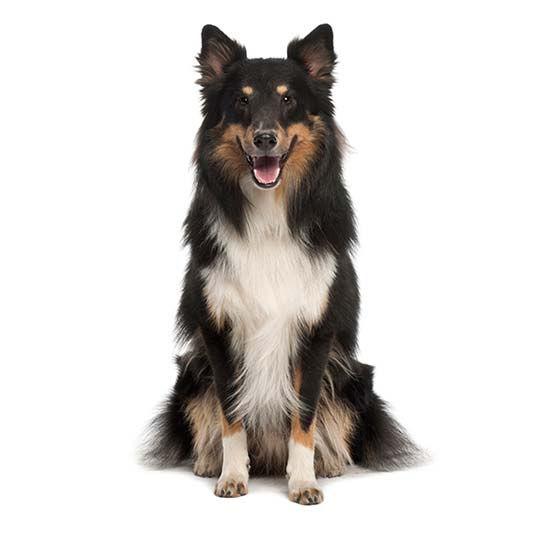 (1) Dog - Reservation