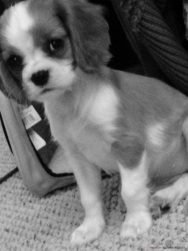 Roxy-puppy