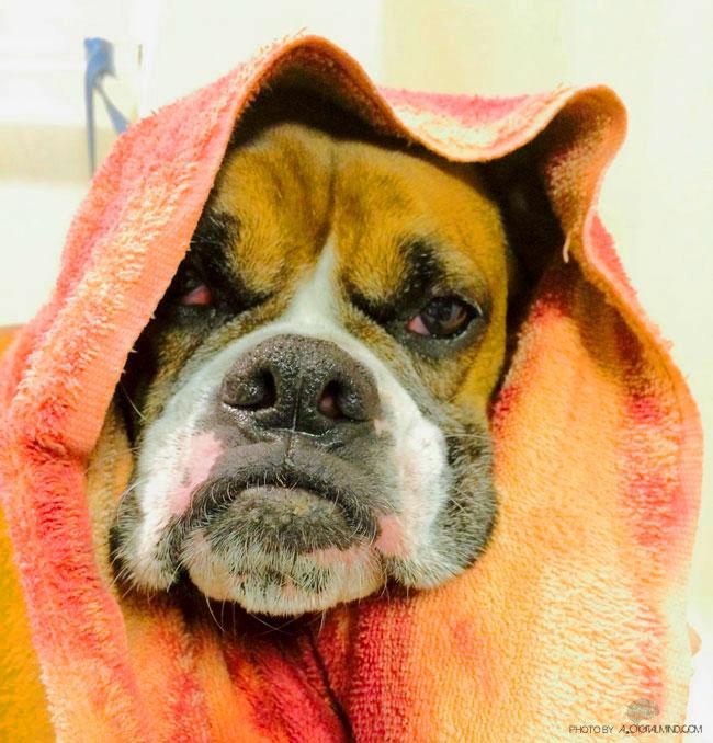 WRK-Dog-3-Bath