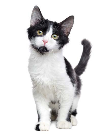 (1) Cat - Reservation