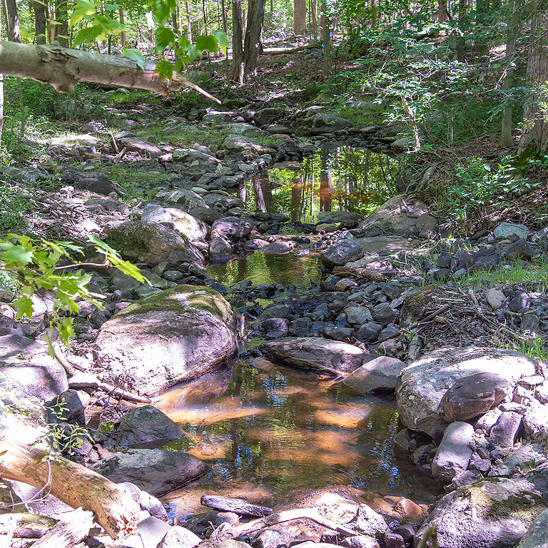 Happy Hour Hike at Nancy Conger West Brook Preserve
