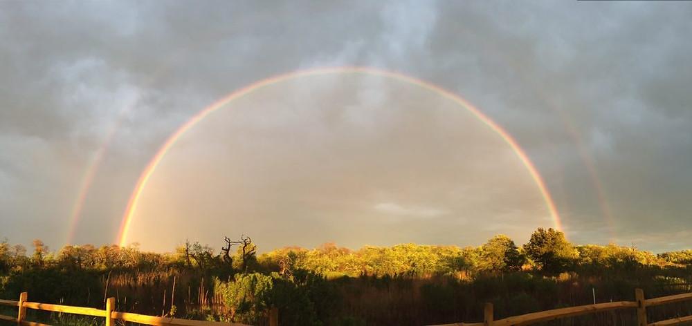 birding rainbow