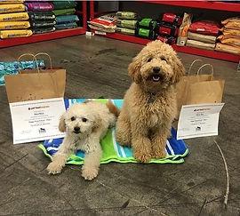 dog training san jose