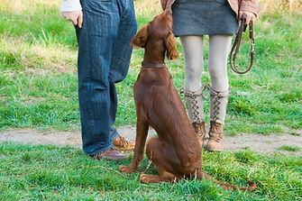 Dog trainer san jose