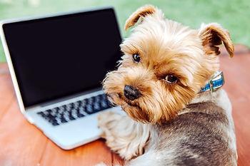 Dog laptop.jpg