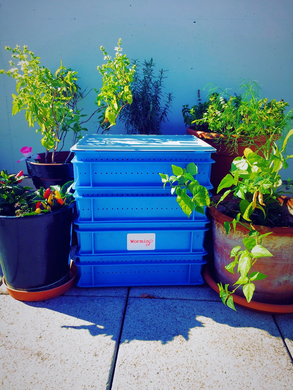 Worm composter. Up-cycled materials.