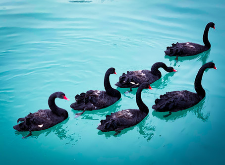 The Black Swan Opportunity for Innovation