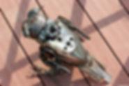 Owl scrap metal sculpture, back
