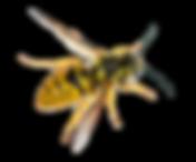 csm_Aeroxon_Wespe_8fc0c3d302.png