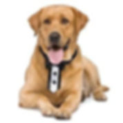 dog with tux.jpg