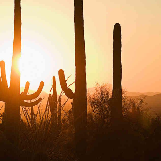 Cactussen en zonsondergangen