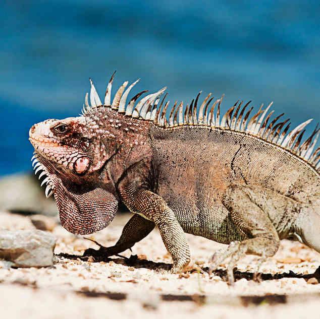 Curaçao's wildlife