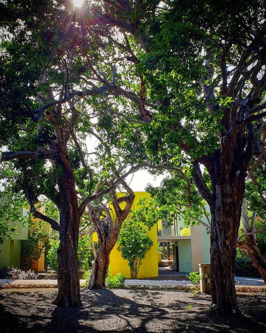 Old trees and design villas