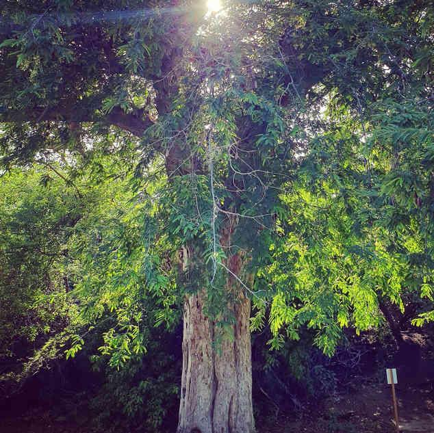 Bomen 3.jpg