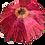 Thumbnail: Gerber Daisy