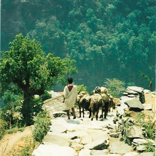 Donkey Herder - Himalayas, Nepal 1988 (2
