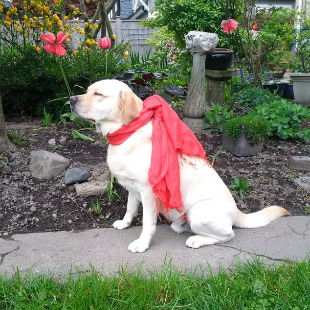 Bliss in Red Mekong scarf.jpg