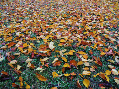 What to do with all those fallen leaves?