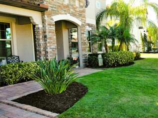 Lawn Care Services in Orlando