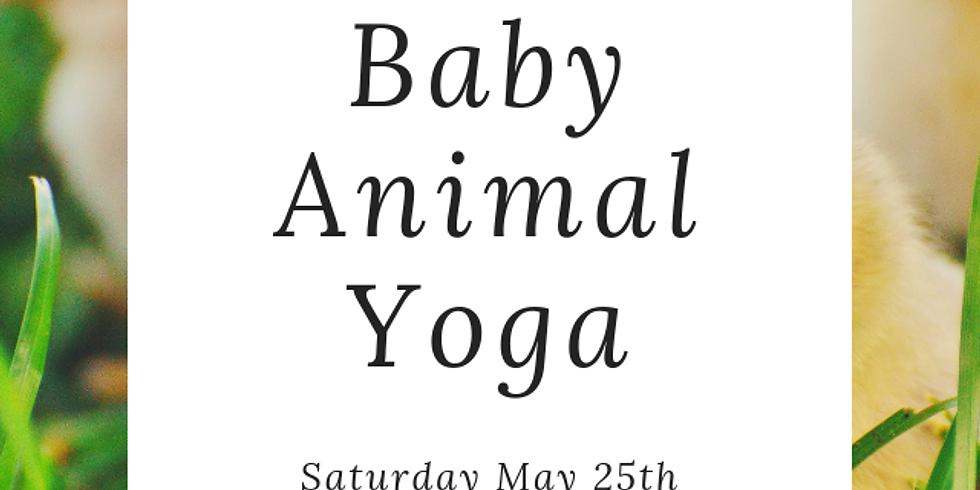 Baby Animal + Goat Yoga