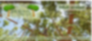 Adult Tree Tops voucherr (2).png