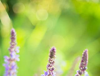 ing_55027_01170-crop-u2982.jpg