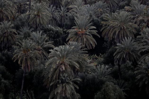 Palms, Morocco