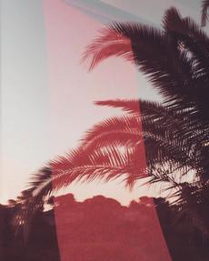 pink_6133.jpg