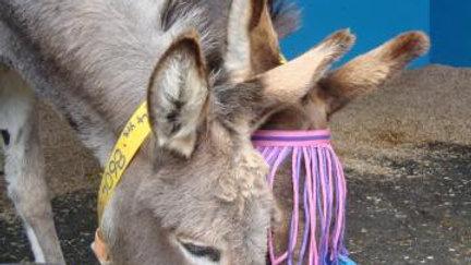 Donkey Forage Balancer