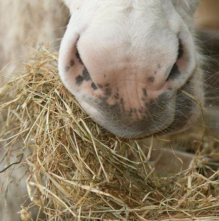 feeding-elderly-donkey.jpg