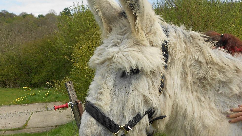 Un licol pour les ânes taille XL
