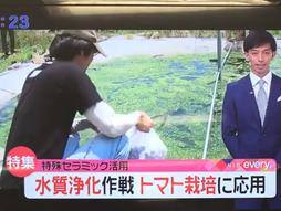 長崎国際テレビ「トマト栽培に応用」