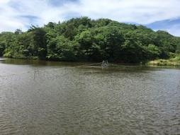 益田市にて池浄化事業に成功