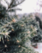 christmas-3879880_960_720.jpg